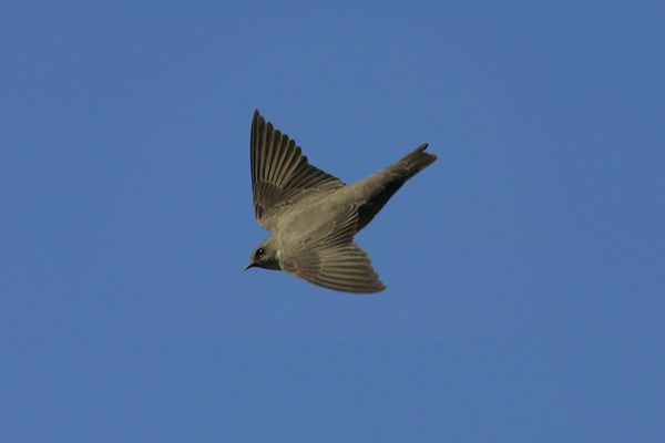 Crag Martin by Bryan Thomas©