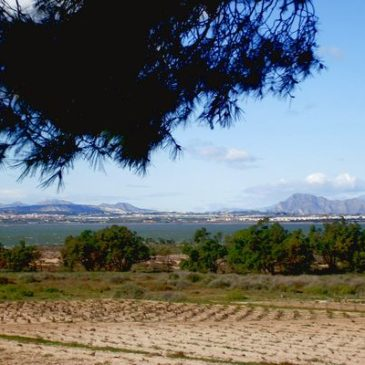 Field Trip La Mata area – Barry Chambers