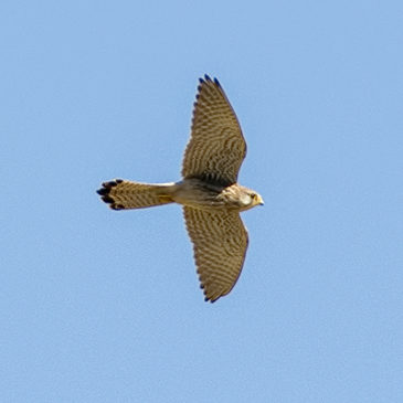 Sightings and Spring Migrants