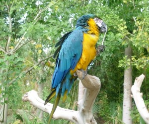 Black and Yellow Macaw by Mary Brazier©