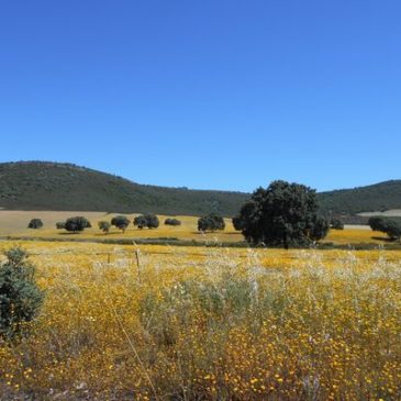 Extremadura six day Trip – Part One –  Malcolm Palmer