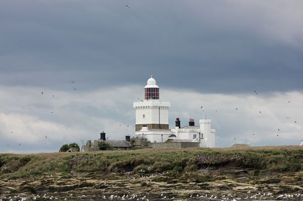 Coquet Island by Mary Brazier©