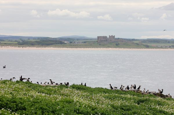 Bamburgh Castle from the Farne Islands by Mary Brazier©
