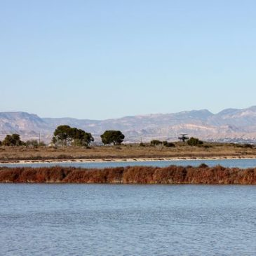 October field trip – Santa Pola area – Malcolm Palmer