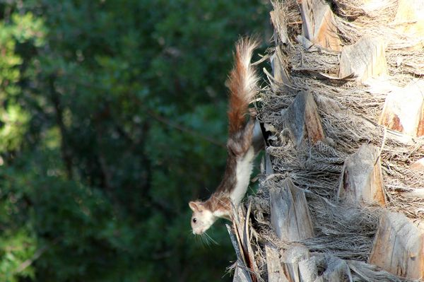 Squirrel by Mary Brazier©