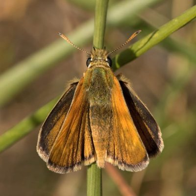 Skipper by Paul Coombes©